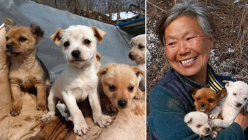 The 61-year-old South Korean woman who rescued 200 dogs. (AAP)