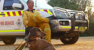 NSW RFS found Wilbur wandering alone on a fire trail.