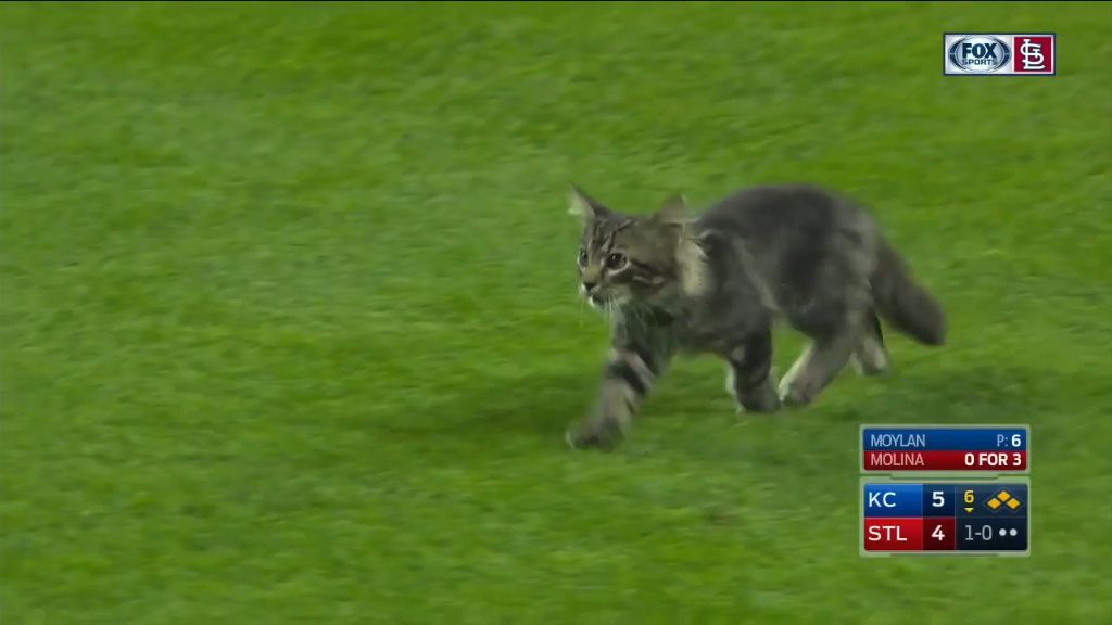 Kitten interrupts game