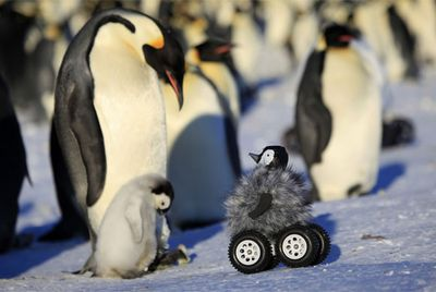 Penguin rover melts hearts