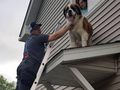 80kg St Bernard rescued from roof in US