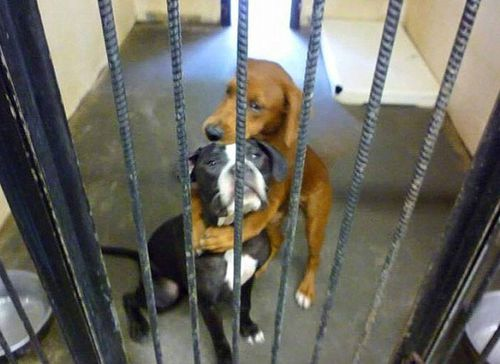 How this photo of two dogs cuddling saved them from being put down