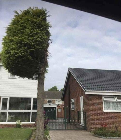 A tree cut in half in a neighbour dispute in the UK.