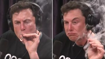 Shares of electric car maker Tesla Inc fell more than six percent today after the CEO appeared to smoke marijuana during an interview.
