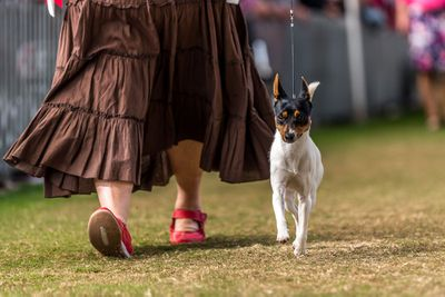 Best puppy in show: Tenterfield terrier
