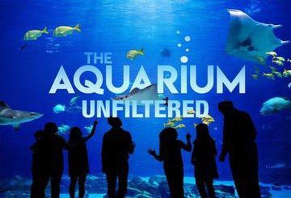 The Aquarium: Unfiltered