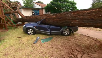 Trees were toppled and powerlines were hit in severe storms yesterday.