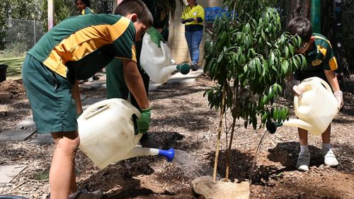 Students from Mary Immaculate Parish Primary School in Eagle Vale, south west Sydney, are pictured planting trees.