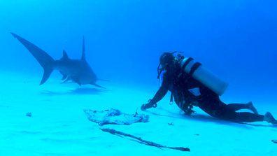 Sharks Among Us