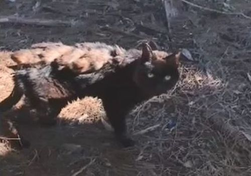 Chelsea was picked up by an animal rescue group after being found seriously dehydrated.