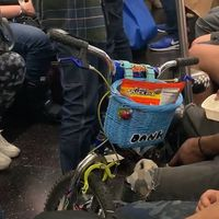 Person filmed feeding rat on NYC subway train