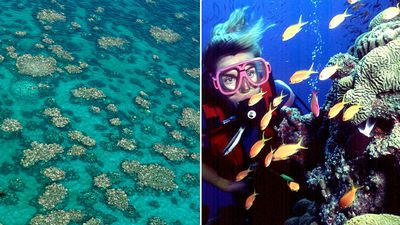 Turnbull's $60m plan save the Great Barrier Reef