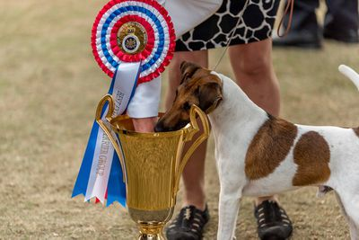 Best in show winner: smooth fox terrier Lex Luthor