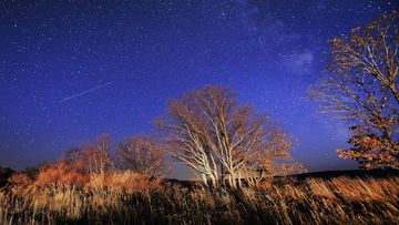 Meteors streak across the night sky during the Orionid meteor shower. Photo by Yuri Smityuk\TASS via Getty Images