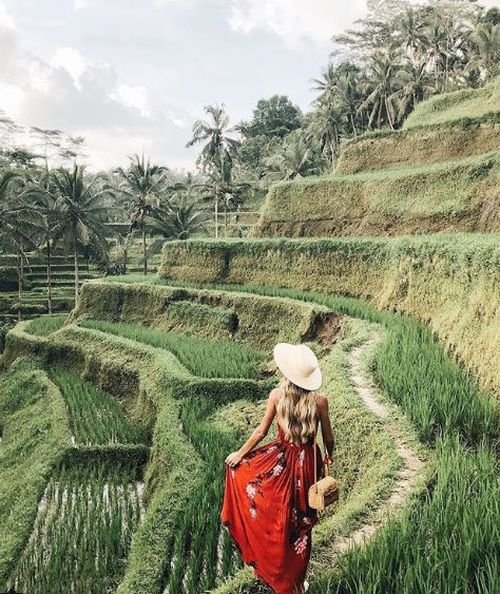 The rice terraces of Ubud have become a classic 'bali shot' tourists must add to their holiday snaps.
