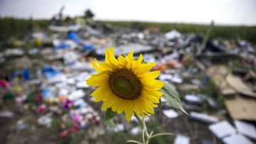 <p>Investigators probing the downing of Malaysia Airlines Flight 17 have been provided with evidence that it was a Russian brigade from Kursk that brought down the plane, but determining who gave the order will prove much more difficult. </p><p> A year on from the grotesque calamity that killed all 298 people aboard MH17, the Dutch Safety Board, which has coordinated the investigation, is yet to present conclusive evidence as to the cause. </p><p>The relatives of victims have requested to be sent seeds from the field of sunflowers that encircle the crash site </p><p>All photos via AAP</p>