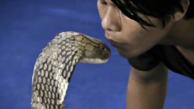 A Thai man tested fate when he pashed a giant king cobra. But other aren't so brave. Click through to see why many cringe at the sight of snakes.