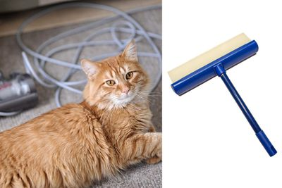 <strong>Squeegee that fur</strong>