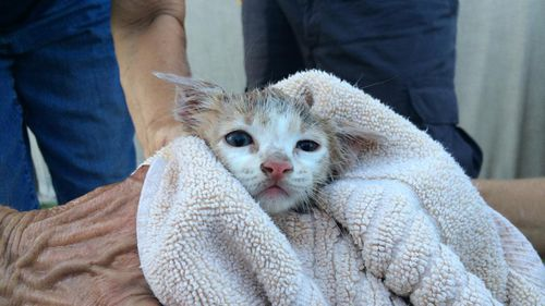 The kitten got cleaned up and Animal Rescue are now looking for a permanent home for him in the San Diego area. (Reddit)