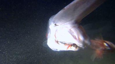 Alien sharks goblin shark