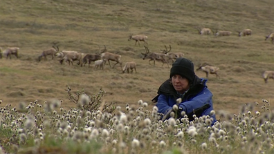 Liz Hayes during caribou migration on the tundra in Northern Alaska.
