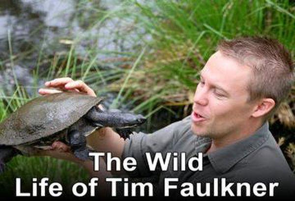 The Wild Life of Tim Faulkner