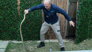 The monster brown snake was was removed from the yard yesterday morning.