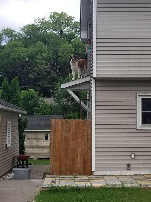The Spring Lake Fire Department is used to rescuing cats out of trees, but nothing this big. Picture: Facebook