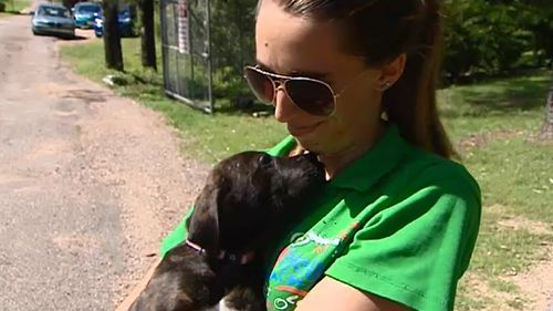 Thirty-one dogs were let loose. (9NEWS)