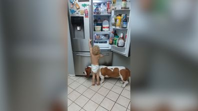 Toddler and pet dog team up to raid fridge