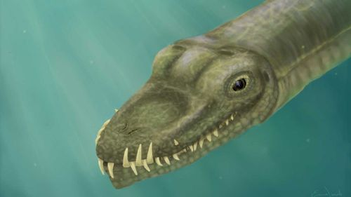 The Tanystropheus was a fearsome long-necked sea creature.