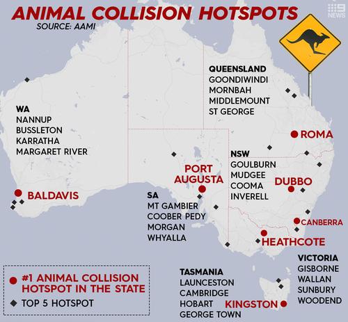 Austrália alerta para riscos de atropelamentos de animais com o retorno do movimento nas estradas