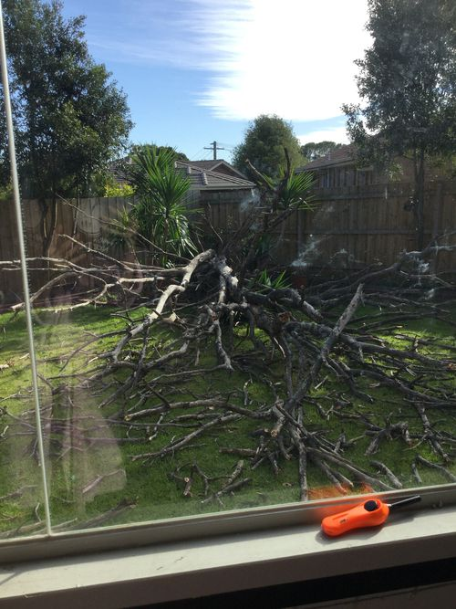 This fallen tree at a property in Melbourne nearly hit the house. Picture: Deeanne Wilkinson
