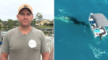 "A man who rushed to the rescue of a baby whale badly tangled in shark nets off the Gold Coast in Queensland has said he is ""100 per cent"" getting a fine from the Department of Agriculture and Fisheries."