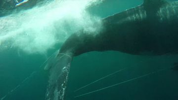 Whale rescued from fishing buoy off Gold Coast