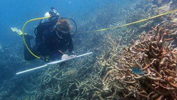 Researchers have returned to survey the 2,300 kilometre site. (AFP)