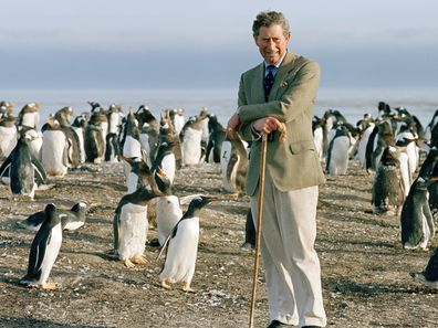 Prince Charles Leaning On His Crook As He Watches The Gentoo Penguins During His Visit To Sea Lion Island In The Falkland Isles.