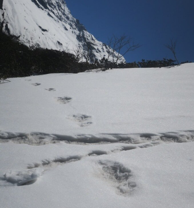 "The Indian army have posted photos of what they claim are the mythical ""Yeti's"" footprints in the snow around Nepal's Makalu-Barun National Park."