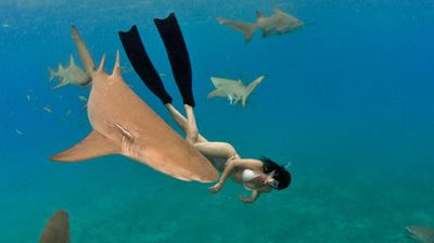 Dressed in only a bikini, the free diver comes within touching distance of the deadly creatures.