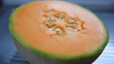 Workers lose jobs as rockmelon sales slump