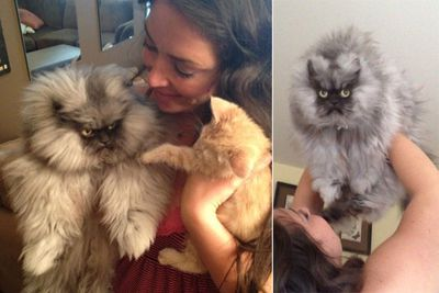 "Grumpy-faced Colonel Meow has more than 18,000 friends on facebook but he couldn't care less.<br/><br/>He says, ""My master is so happy that I have so many friends...what she calls 'friends' I call 'minions'. Stupid humans."""