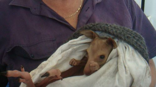 Kangaroos killed in cruel act