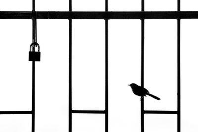 'Lockdown'. Category: Urban Birds. Silver award winner.