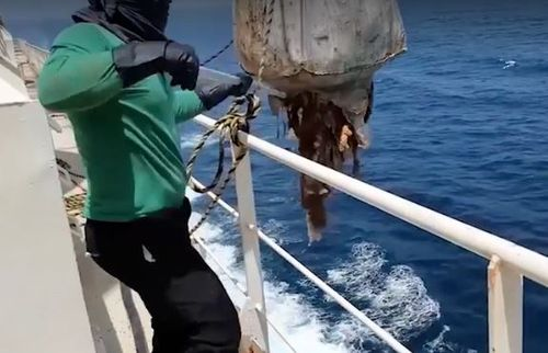 The workers then dump the carcasses overboard into the ocean. (Supplied: Animals Australia)