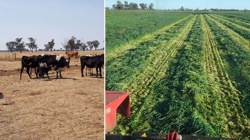 Then and now: Steve Dalitz documents the last few years drought versus this year's lush green.