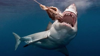 Second shark device added to WA subsidy