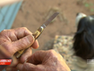 Aussie bushman's shock over fine for carrying pocket knife