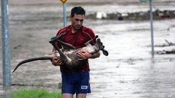 Ray Cole saves a roo from the Bremer River. Photo: Nick De Villiers