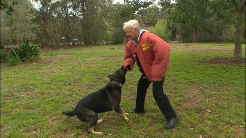 Mr Austin said that if a person remains calm, doesn't look at the dog directly and minimises their injuries, a canine should be defused (Supplied).