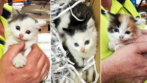 Naughty kitten stowaways alive and well following rescue from car engine